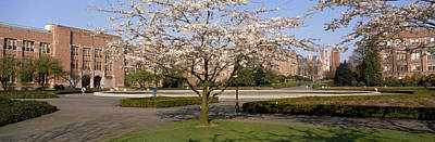 Cherry Blossom Trees In A University Art Print by Panoramic Images