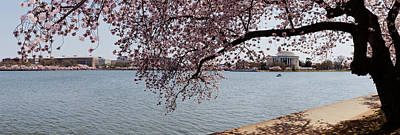 Cherry Blossoms Photograph - Cherry Blossom Trees With The Jefferson by Panoramic Images