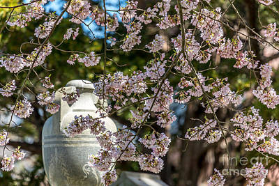 Photograph - Cherry Blossom Urn by Susan Cole Kelly