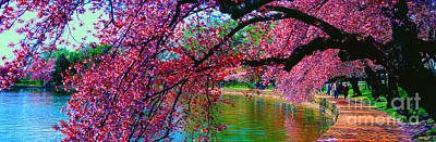 Cherry Blossom Walk Tidal Basin At 17th Street Art Print