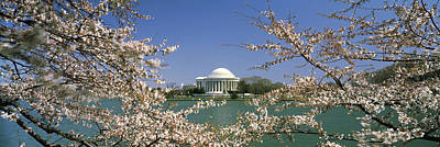 Jefferson Memorial Photograph - Cherry Blossom With Memorial by Panoramic Images
