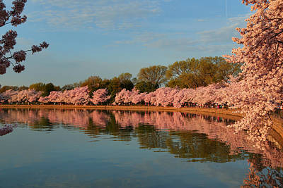 Cherry Blossoms 2013 - 001 Art Print by Metro DC Photography