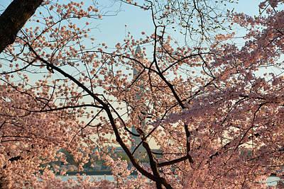 Washington Photograph - Cherry Blossoms 2013 - 004 by Metro DC Photography