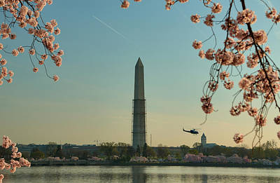 Cherry Blossoms 2013 - 012 Art Print by Metro DC Photography