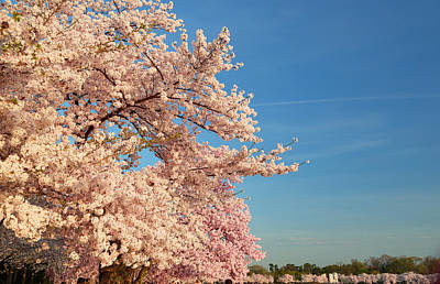 Cloud Photograph - Cherry Blossoms 2013 - 014 by Metro DC Photography