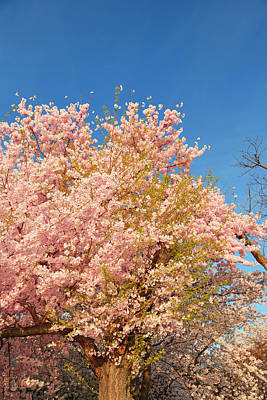 Tidal Photograph - Cherry Blossoms 2013 - 016 by Metro DC Photography