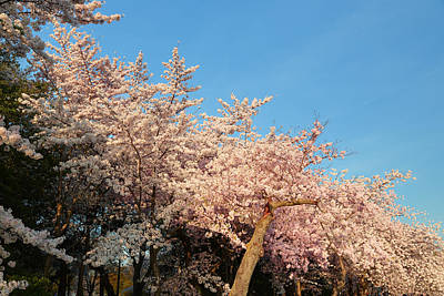 Washington Monument Photograph - Cherry Blossoms 2013 - 019 by Metro DC Photography