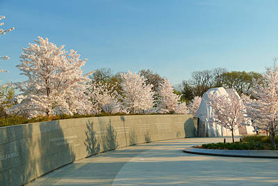 Cherry Blossoms 2013 - 022 Art Print by Metro DC Photography