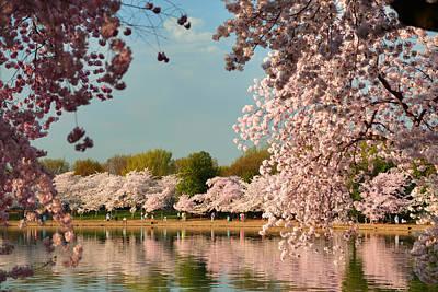 Cherry Blossoms 2013 - 023 Art Print
