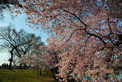 Photograph - Cherry Blossoms 2013 - 038 by Metro DC Photography
