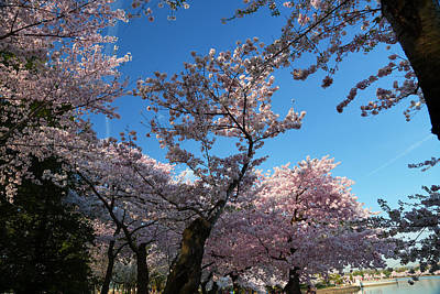 Photograph - Cherry Blossoms 2013 - 042 by Metro DC Photography
