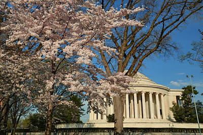 Photograph - Cherry Blossoms 2013 - 048 by Metro DC Photography