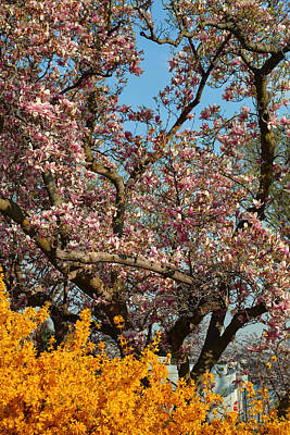 Cherry Trees Photograph - Cherry Blossoms 2013 - 051 by Metro DC Photography