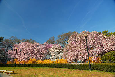 Cherry Blossoms 2013 - 052 Art Print by Metro DC Photography