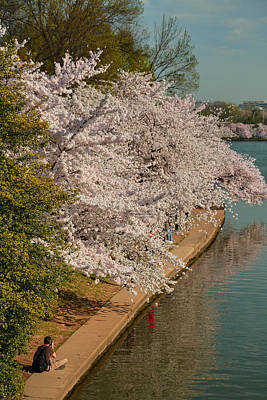 Photograph - Cherry Blossoms 2013 - 053 by Metro DC Photography