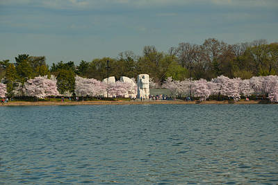 Blossom Photograph - Cherry Blossoms 2013 - 055 by Metro DC Photography