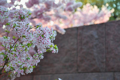 Photograph - Cherry Blossoms 2013 - 066 by Metro DC Photography