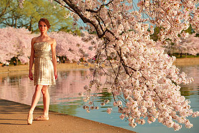 Tidal Photograph - Cherry Blossoms 2013 - 080 by Metro DC Photography