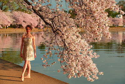 Photograph - Cherry Blossoms 2013 - 081 by Metro DC Photography