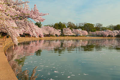 Photograph - Cherry Blossoms 2013 - 083 by Metro DC Photography
