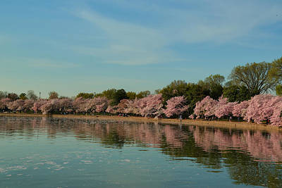 Cherry Tree Photograph - Cherry Blossoms 2013 - 088 by Metro DC Photography