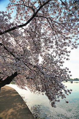 Washington Monument Photograph - Cherry Blossoms 2013 - 092 by Metro DC Photography