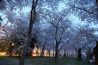 Cherry Blossoms 2013 - 100 Art Print by Metro DC Photography
