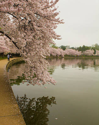 Photograph - Cherry Blossoms Along The Tidal Basin by Leah Palmer