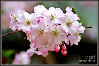 Cherry Blossoms And A Bee Art Print by Patti Whitten
