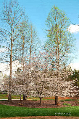 Photograph - Cherry Blossoms And Birch Trees by Paulette B Wright