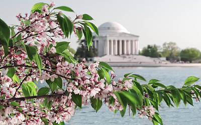 Art Print featuring the photograph Cherry Blossoms And The Jefferson Memorial 2 by Mitchell R Grosky