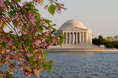 Art Print featuring the photograph Cherry Blossoms And The Jefferson Memorial 3 by Mitchell R Grosky