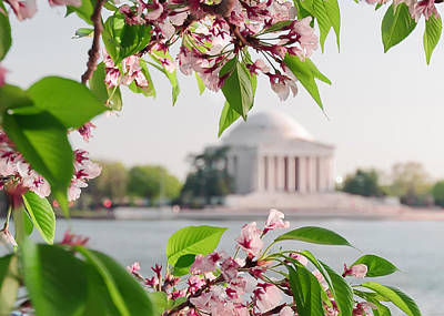 Print featuring the photograph Cherry Blossoms And The Jefferson Memorial by Mitchell R Grosky
