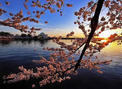 Jefferson Memorial Digital Art - Cherry Blossoms And The Setting Sun Over The Tidal Basin by SCB Captures