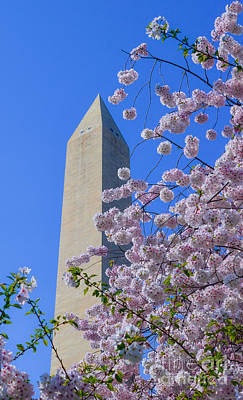 Queen Rights Managed Images - Cherry Blossoms and Washington Monument Royalty-Free Image by Jeff at JSJ Photography