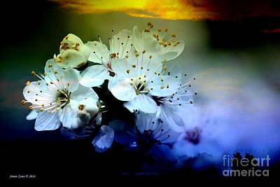 Photograph - Cherry Blossoms by Annie Zeno