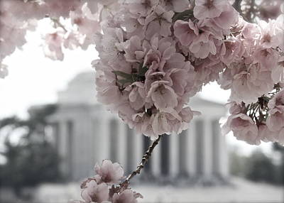 Photograph - Cherry Blossoms At Jefferson Memorial by Karen Saunders