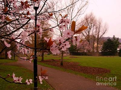 Photograph - Cherry Blossoms At Kirkland In Kendal by Joan-Violet Stretch