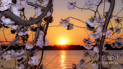 Photograph - Cherry Blossoms At Sunset On The Basin by Jeff at JSJ Photography