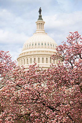 Cherry Blossoms At The Capitol Building Art Print by Susan Schmitz