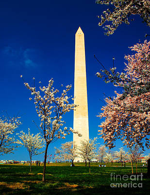 Photograph - Cherry Blossoms At The Monument by Nick Zelinsky
