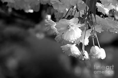 Photograph - Cherry Blossoms by Deena Otterstetter
