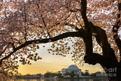 Washington Monument Photograph - Cherry Blossoms Frame The Jefferson Memorial by Oscar Gutierrez