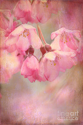 Pendulum Digital Art - Cherry Blossoms II by Chris Armytage