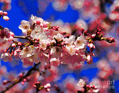 Photograph - Cherry Blossoms by Larry Oskin