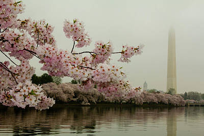 Photograph - Cherry Blossoms On A Foggy Morning by Leah Palmer