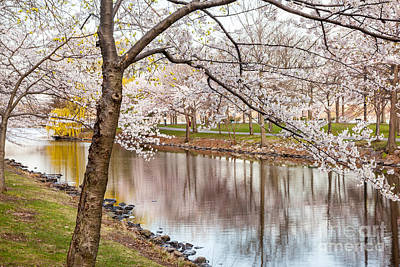 Photograph - Cherry Blossoms On The Storrow Lagoon by Susan Cole Kelly