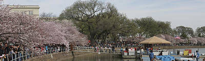 Cherry Blossoms - Panorama - Washington Dc - 01132 Art Print by DC Photographer