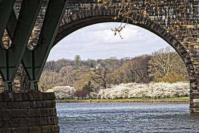 Photograph - Cherry Blossoms Through The Bridge by Alice Gipson