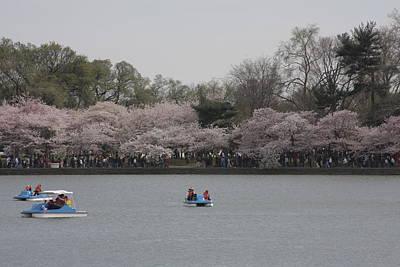Cherry Blossoms - Washington Dc - 011310 Art Print by DC Photographer